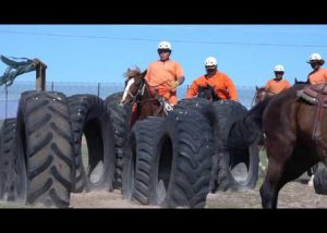The Wild Horse Inmate Program at Florence Prison